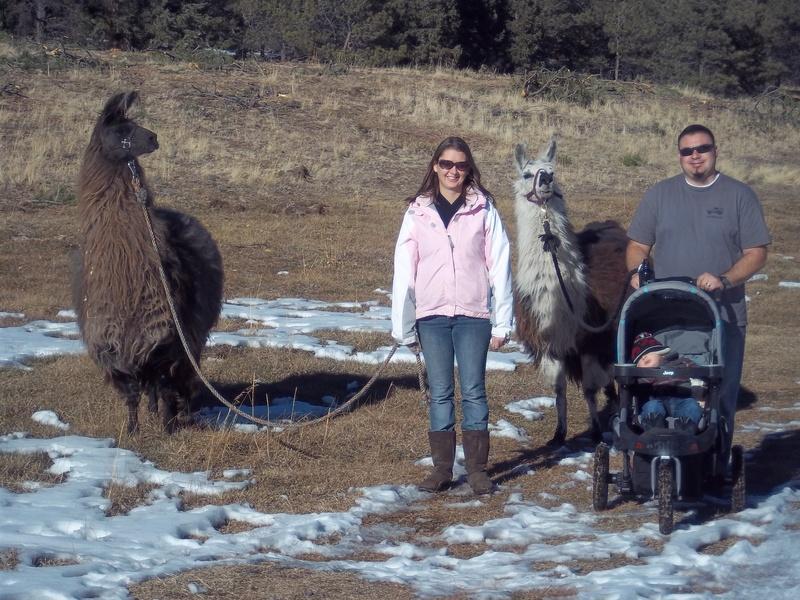 Llamas love families