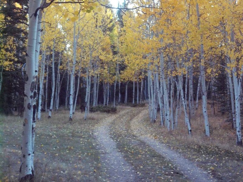 Fall mountain trails